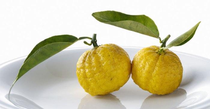 yuzu-buah-berkulit-keriput-dari-jepang-untuk-lezatkan-masakan-eDmY39KP3X